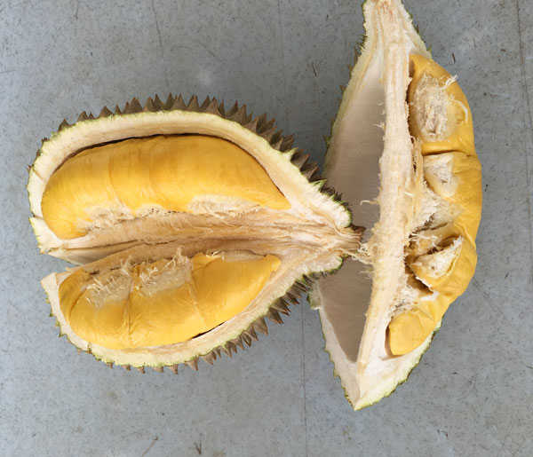 The Durian - In All Its Glory